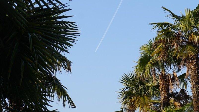 木々の間を飛行機雲が通り抜けている写真