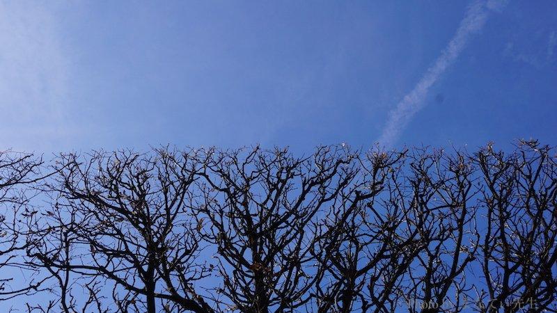 木の枝が切り揃えられて、空と枝が綺麗に区切られている写真